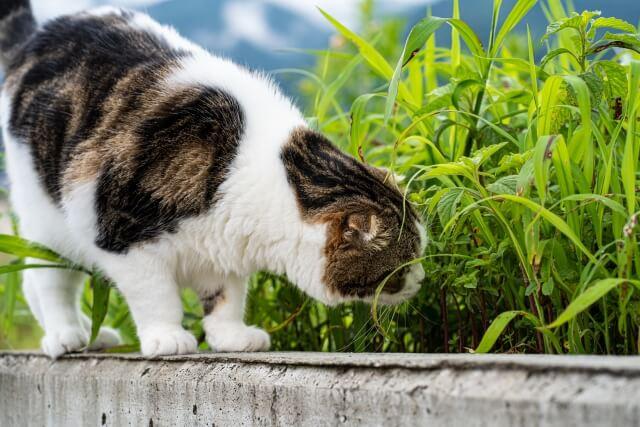 何かを探している野良猫