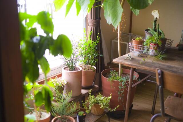 大量の観葉植物