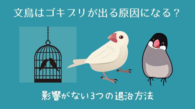 文鳥はゴキブリが出る原因になる?影響がない3つの退治方法