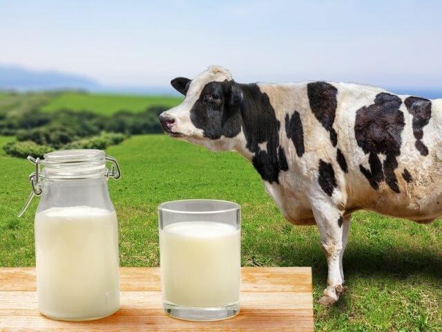 牛乳と乳牛