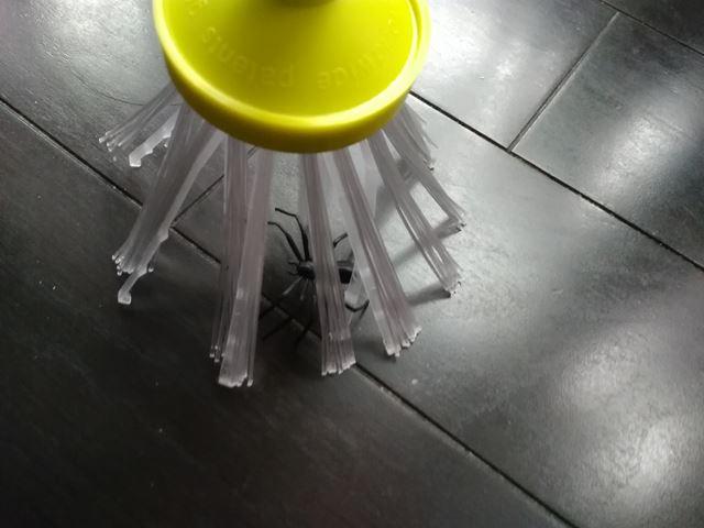 虫虫ゲッターの範囲にクモを囲い込む